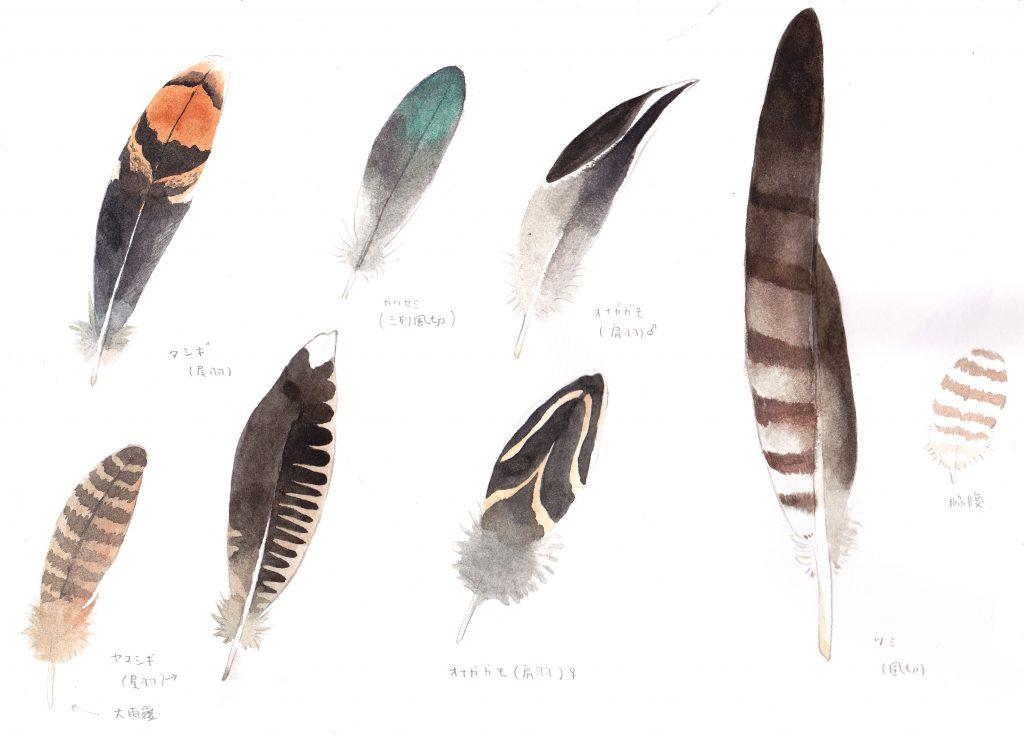 鳥の羽のスケッチ