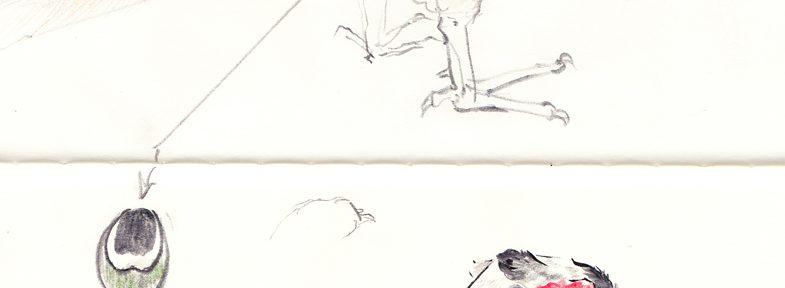 鳥の博物館-雉のスケッチ-